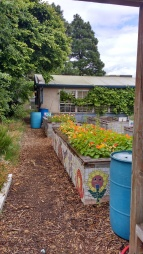 Raised beds and water catchment, Interagency High School