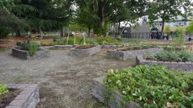 Raised beds, Rainier Beach Learning Garden