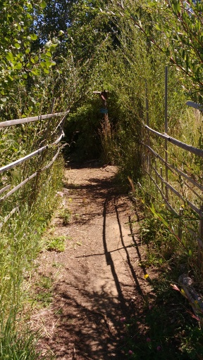 Forest trail, Hood River Middle School