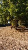 Trees and seating, Wedgwood Elementary