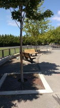 Trees and seating, West Woodlands Elementary