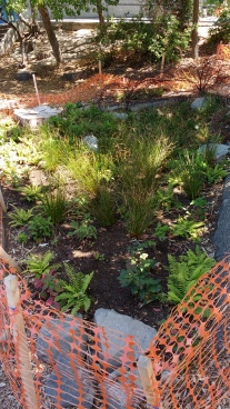 Bioswale, West Woodlands Elementary