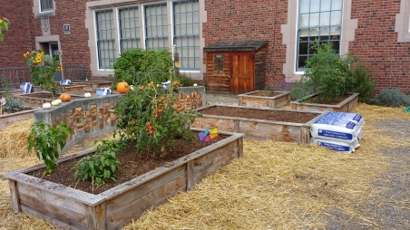 Raised beds and shed, Bagley Elementary