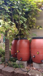 Water catchment from greenhouse, Montlake Elementary