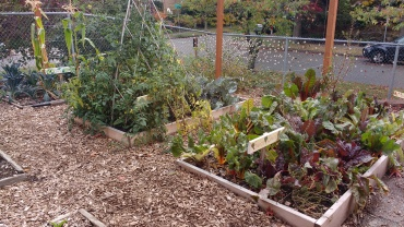 Raised beds, Montlake Elementary garden