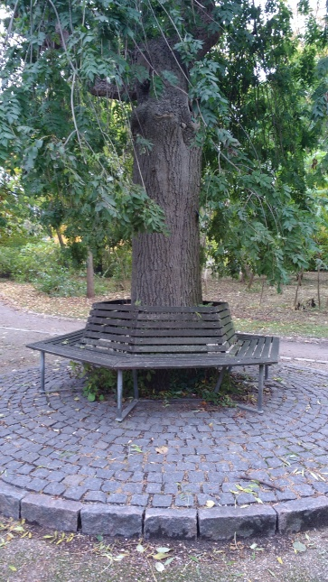 Seating (and tree protection)